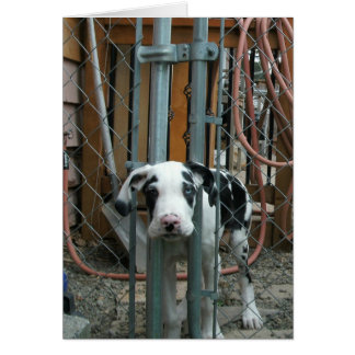"""""""Oh Cash!"""" Great Dane Puppy Note Card"""
