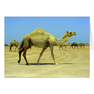 Oh happy day - camels in the desert card
