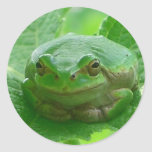 Oh happy day - green frog close up round sticker