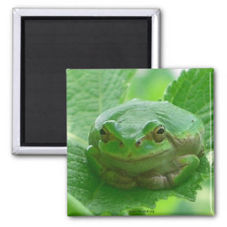 Oh happy day - green smiling frog magnet