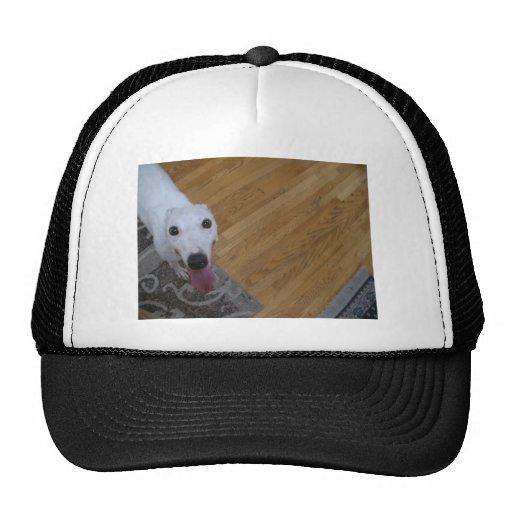 Oh Hi! Greyhound Love Trucker Hat