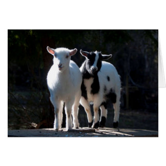 Oh So Cute Nigerian Dwarf Goats Card
