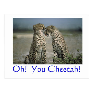 Oh!  You Cheetah! Postcard
