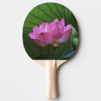 Ohga Lotus, Sankei-en Garden, Yokohama, Japan