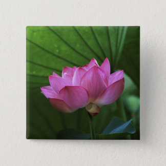 Ohga Lotus, Sankei-en Garden, Yokohama, Japan 15 Cm Square Badge