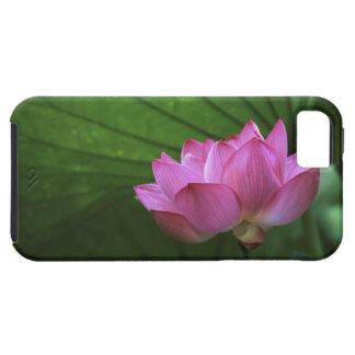 Ohga Lotus, Sankei-en Garden, Yokohama, Japan iPhone 5 Cover