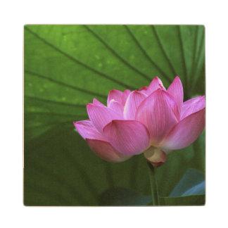 Ohga Lotus, Sankei-en Garden, Yokohama, Japan Maple Wood Coaster