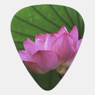 Ohga Lotus, Sankei-en Garden, Yokohama, Japan Plectrum