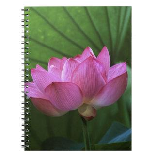 Ohga Lotus, Sankei-en Garden, Yokohama, Japan Spiral Note Books