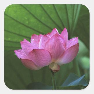 Ohga Lotus, Sankei-en Garden, Yokohama, Japan Square Sticker