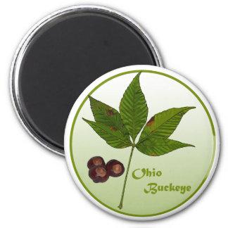 Ohio Buckeye Tree 6 Cm Round Magnet