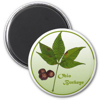 Ohio Buckeye Tree Magnet