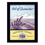 Oil of Lavender - Grasse France Postcards