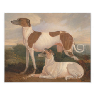 oil paintings of greyhounds photographic print