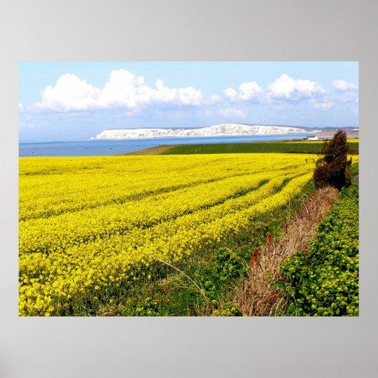 Oilseed rape field in the Isle of Wight