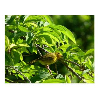 Oiseau Jaune - Martinique, FWI Postcard