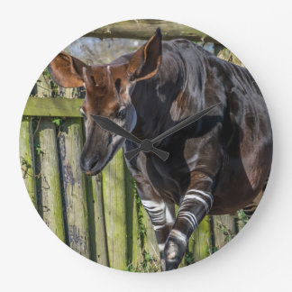 Okapi at the zoo wall clock