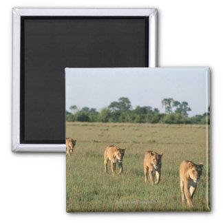 Okavango Delta, Botswana 4 Magnet