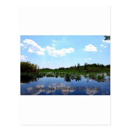 Okefenokee National Wildlife Refuge Postcard