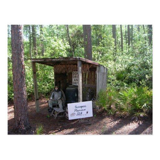 Okefenokee Swamp Park Post Card