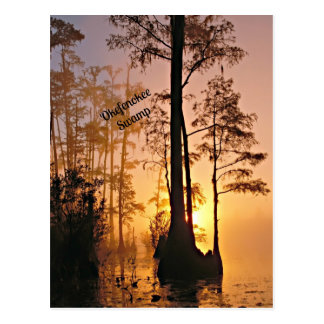 Okefenokee Swamp Post Card