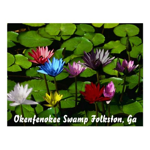 Okenfenokee Swamp Folkston, Ga Postcards
