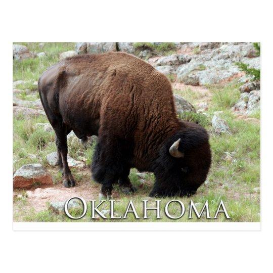Oklahoma Bison Postcard