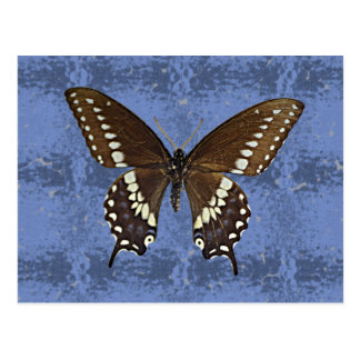 Oklahoma Black Swallowtail Butterfly Postcard