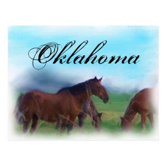 Oklahoma horses postcard