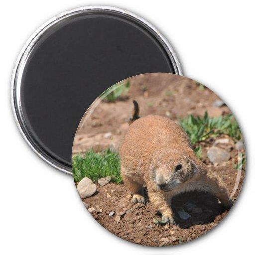 Oklahoma Prairie Dog Refrigerator Magnets