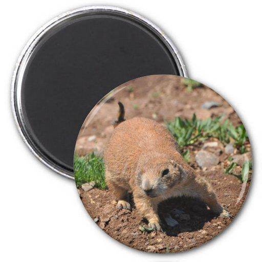 Oklahoma Prairie Dog Fridge Magnet