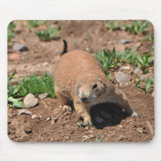Oklahoma Prairie Dog Mouse Pad