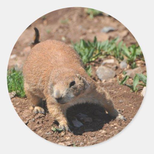 Oklahoma Prairie Dog Round Sticker