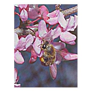 Oklahoma Redbud and Honeybee Postcard