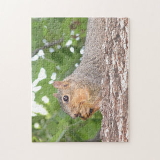 Oklahoma Squirrel Puzzle
