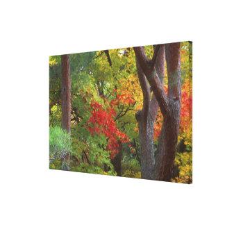 Okochi Sanso, Arashiyama, Kyoto, Japan 5 Canvas Print