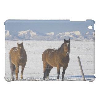 okotoks, alberta, canada cover for the iPad mini