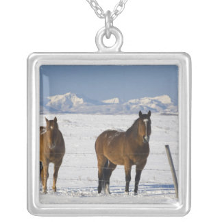 okotoks, alberta, canada silver plated necklace