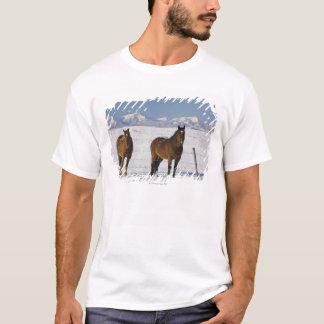 okotoks, alberta, canada T-Shirt
