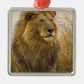 Old adult black maned Lion, Masai Mara Game Silver-Colored Square Decoration