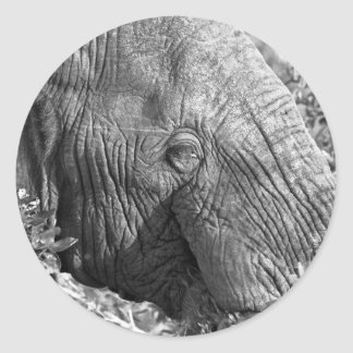 Old African Elephant Round Sticker