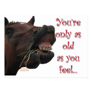 Old as You feel funny horse Postcard
