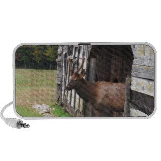 Old Barn, Elk with Velvet Antlers Travel Speaker