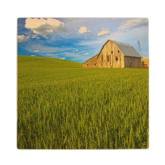 Old Barn in Field of Spring Wheat 2 Wood Coaster