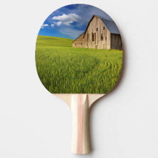 Old Barn in Field of Spring Wheat Ping Pong Paddle