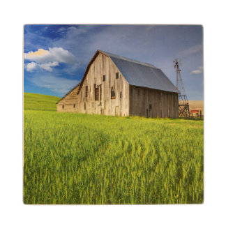 Old Barn in Field of Spring Wheat Wood Coaster
