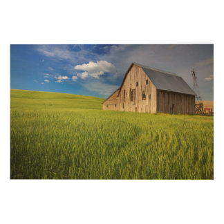 Old Barn in Field of Spring Wheat Wood Print