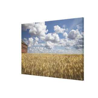 Old Barn in Wheat Field 2 Canvas Print