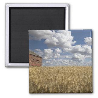 Old Barn in Wheat Field 2 Magnet
