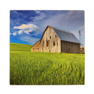 Old Barn Surrounded by Spring Wheat Field 1 Wood Coaster